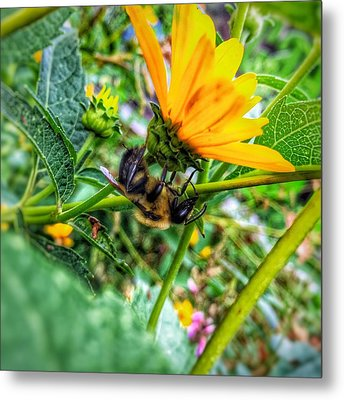 Pollinated Buzz Metal Print