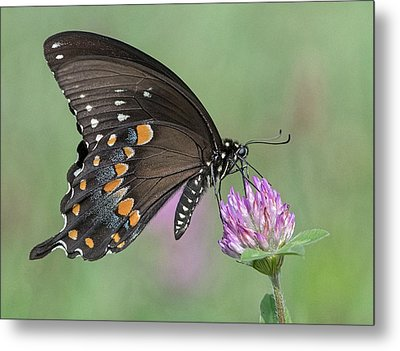 Metal Print featuring the photograph Pollinating #1 by Wade Aiken