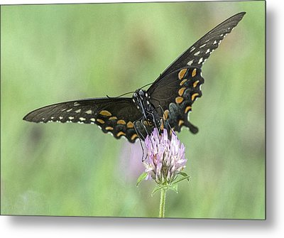 Metal Print featuring the photograph Pollinating #2 by Wade Aiken