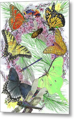 Pollinator Profusion Metal Print by Forrest C Greenslade PhD