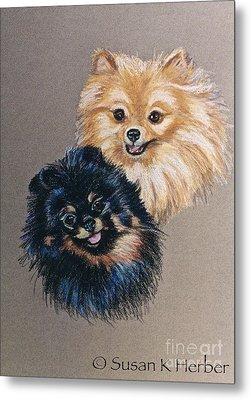 Pomeranian Pair Metal Print by Susan Herber