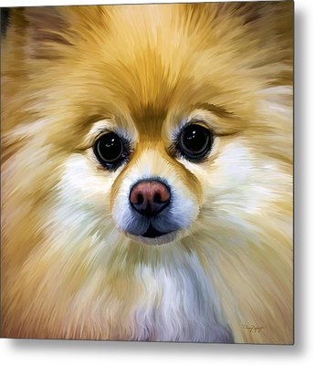Pomeranian Metal Print by Thanh Thuy Nguyen