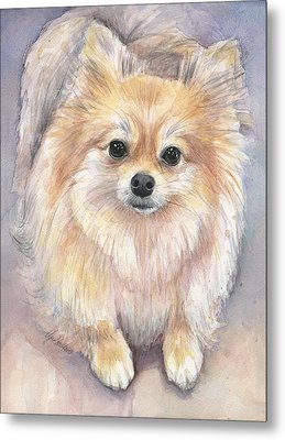 Pomeranian Watercolor Metal Print by Olga Shvartsur