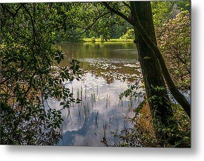 Pond In Spring Metal Print
