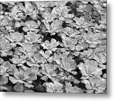 Pond Plants Metal Print by Juergen Roth