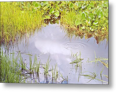 Pond Ripples Photo Metal Print by Peter J Sucy