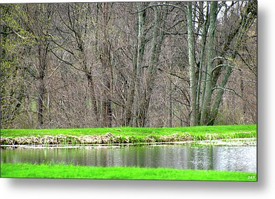 Pond Starts To Grow Metal Print by Debra     Vatalaro
