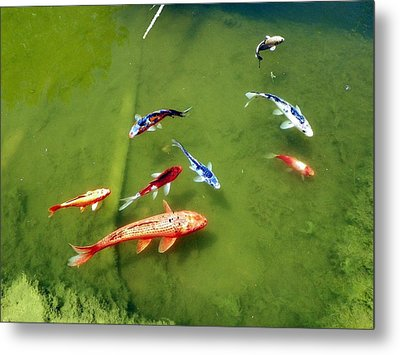 Pond With Koi Fish Metal Print by Joseph Frank Baraba