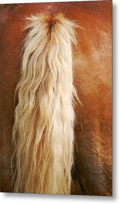 Pony Tail Metal Print