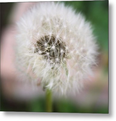 Poof Metal Print by Lynnette Johns