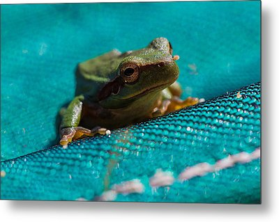 Metal Print featuring the photograph Pool Frog by Richard Patmore
