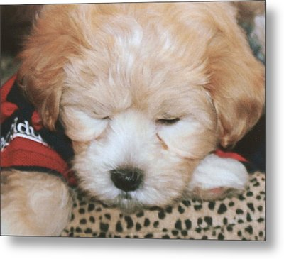 Metal Print featuring the photograph Pooped Pup by Diane Merkle