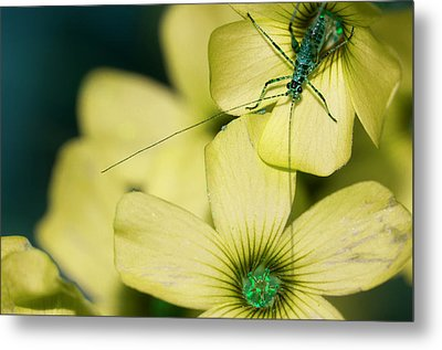 Metal Print featuring the photograph Pop Macro No. 2 by Laura Melis