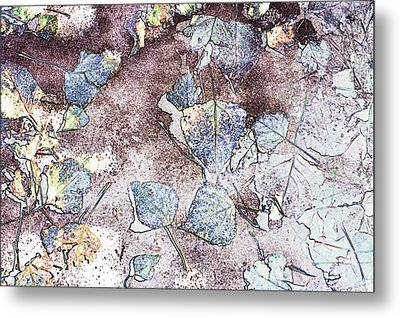 Poplar Leaf Path Metal Print