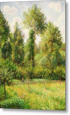 Metal Print featuring the painting Poplars - Eragny by Camille Pissaro