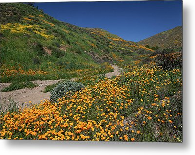 Metal Print featuring the photograph Poppies Along Riverbed by Cliff Wassmann