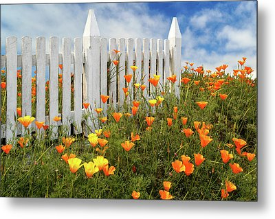 Metal Print featuring the photograph Poppies And A White Picket Fence by James Eddy
