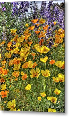 Metal Print featuring the photograph Poppies And Lupines by Jim and Emily Bush
