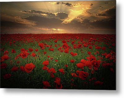 Poppies At Sunset Metal Print by Albena Markova