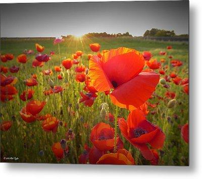 Poppies At Sunset Metal Print by Matt Taylor