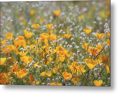 Metal Print featuring the photograph Poppies Fields Forever  by Saija Lehtonen