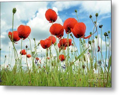 Poppies In Field Metal Print by Jelena Jovanovic