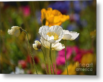 Poppies In The Spring Metal Print by Deb Halloran