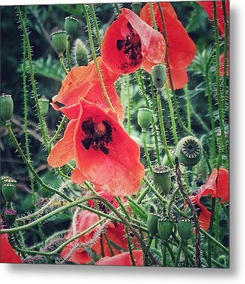Metal Print featuring the photograph Poppies by Karen Stahlros