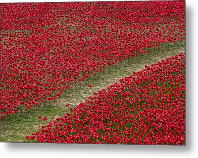 Poppies Of Remembrance Metal Print by Martin Newman