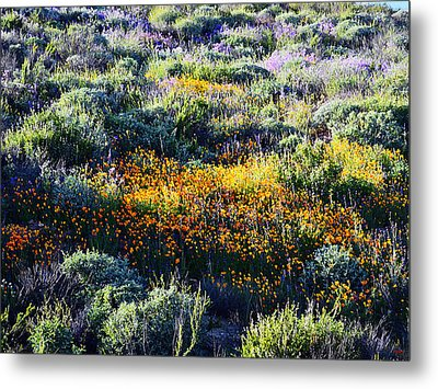 Metal Print featuring the photograph Poppies On A Hillside by Glenn McCarthy Art and Photography