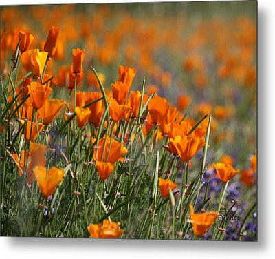 Metal Print featuring the photograph Poppies by Patrick Witz