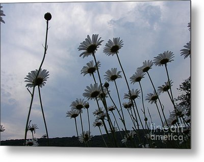 Poppin Metal Print by Priscilla Richardson