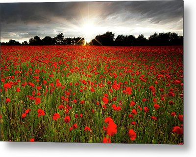 Poppy Field At Sunset Metal Print by Doug Chinnery