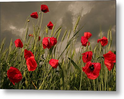 Poppy Field Before The Storm Metal Print by Floriana Barbu