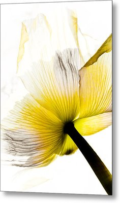 Poppy Flower Art Metal Print