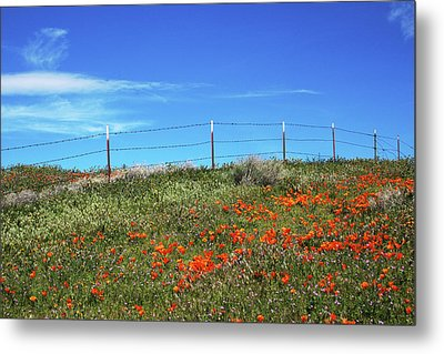 Poppy Hill- Art By Linda Woods Metal Print