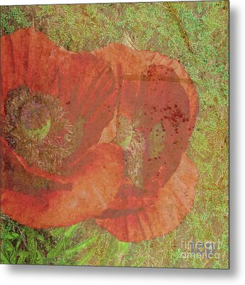 Metal Print featuring the photograph Poppy Love by Traci Cottingham