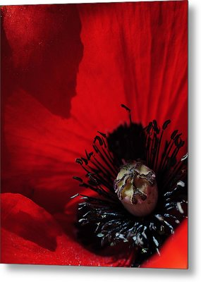 Poppy No. 2 Metal Print by The Forests Edge Photography - Diane Sandoval