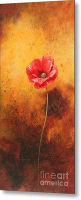 Poppy Painting Metal Print by John Francis