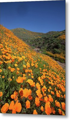 Metal Print featuring the photograph Poppy Superbloom Vertical by Cliff Wassmann