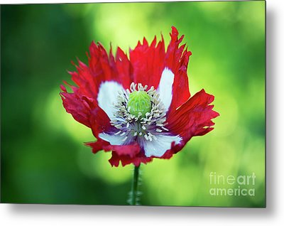 Metal Print featuring the photograph Poppy Victoria Cross by Tim Gainey
