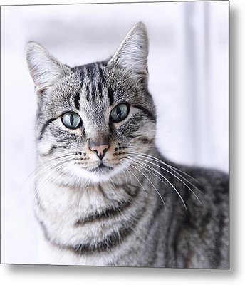 Portrait Gray Tabby Cat Metal Print by Maika 777