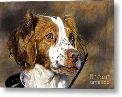 Metal Print featuring the photograph Portrait Of A Brittany - D009983-a by Daniel Dempster