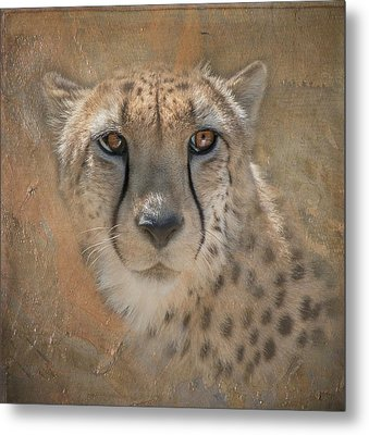 Portrait Of A Cheetah Metal Print