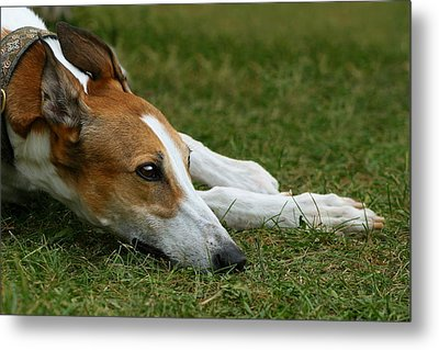 Portrait Of A Greyhound - Soulful Metal Print by Angela Rath