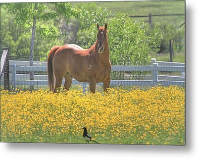 Portrait Of A Quarter Horse Metal Print by Donna Kennedy
