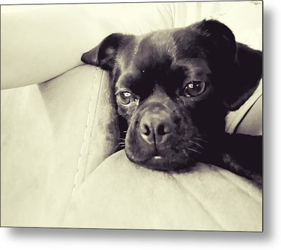 Portrait Of A Rescue Metal Print by Laurie Perry