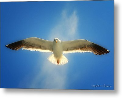 Metal Print featuring the photograph Portrait Of A Seagull by John A Rodriguez