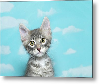 Portrait Of A Tiny Tabby Kitten Metal Print by Sheila Fitzgerald