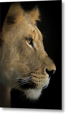 Metal Print featuring the digital art Portrait Of A Young Lion by Ernie Echols